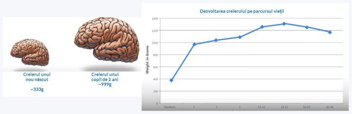 dezv-creier